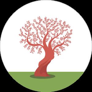 Zeytuna tree